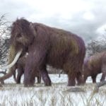Monumental Mammoth-Bone Structure Built 26,000 Years Ago