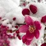 Colorado snow totals for April 12-13, 2020