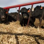 Even with beef plants staying open, reduced capacity means Colorado ranchers feel the coronavirus pinch