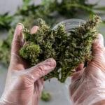 A Job Seeker's Guide to Colorado Marijuana Jobs and Cannabis Careers
