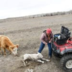 Colorado ranchers, restaurants confront cascading effects of coronavirus on beef processing industry