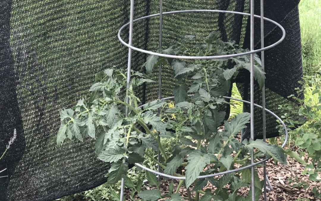 How to save your dry garden during a hot Colorado summer