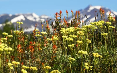 The best places to find wildflowers in Colorado this summer