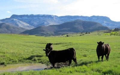 Top 6 Southern Colorado Cattle Ranches on the Market