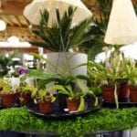 Venus flytrap, carnivorous plants: How to find, grow & care for in Colorado