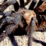 Southern Colorado tourism climbs amid tarantula migration
