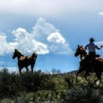 BLM aims to cut wild horse numbers in Colorado by more than half