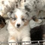 House passes bill on sales of puppies and kittens in pet stores   OutThere Colorado