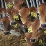 Nebraska declares pro-meat day on Colorado meatless day - StarTribune.com