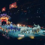 Colorado lawmakers move closer to prohibiting certain animals from being used in traveling performances