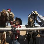 Traffic goes by fast, but this historic mule train refuses to fade in Colorado Springs