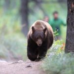 Colorado woman found dead after apparent bear attack
