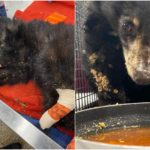 Video Shows Road to Recovery for Bear Cub Rescued from Colorado Wildfire