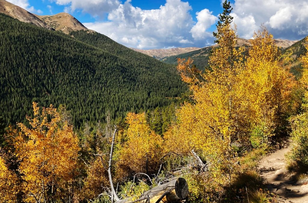 Colorado Leaf-peeping: Tress changing first in Northern Colorado