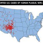 Plague linked to fleas makes headlines in Colorado, California